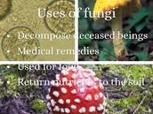 Uses of Fungi
