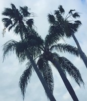 Me gusta palmeras