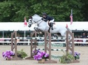 hunter jumper horses