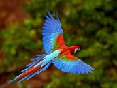 This beautiful bird is flying.