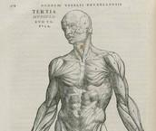 De Humani Corporis Fabrica (1543)