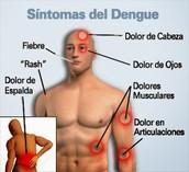 Las manifestaciones clínicas del dengue pueden dividirse en tres etapas: • Etapa febril • Etapa crítica • Etapa de recuperación