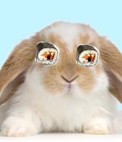 Kyoto bunny