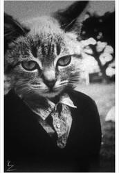 Tom Cat Attorney