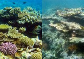 Same like first photo when coral reef die it cost few days when it return from died coral reef it cost over thousands years.