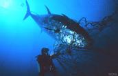 Tuna tragedy