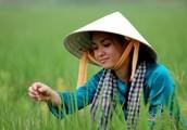 Clothing of Vietnam