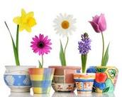 GaVS Spring Break: April 7th - April 11th