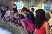 Aquatic Explorations