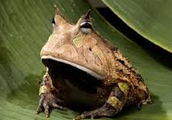 Do You Know the Difference Between a Frog and a Toad?