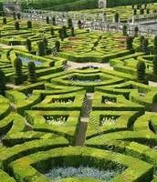 Labirint garden
