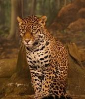 Native Animal
