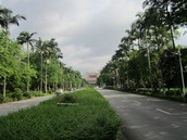 Palm tree lined lane at Wuyi campus