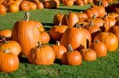 JM Pumpkin Patch