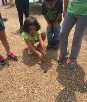 1st Grade Frog Hunting