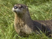 The River Otter