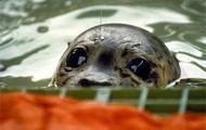 Saved Seal