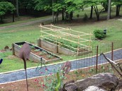 Mrs.Allison's garden