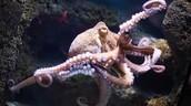 Dislikes octopus