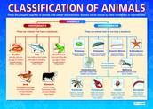 animal classified