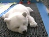 The first sleep