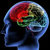How long has research been conducted on the Brain?