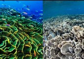 Who is really affected by the ocean becoming acidic?