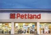 We are PetLand