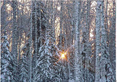 The Taiga is a biome; The taiga is a cold, snow forest.