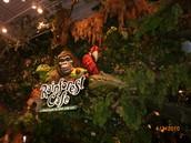 Rainforest Cafe'