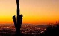 the cactus 3