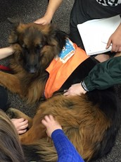 Therapy Dogs at CB West!