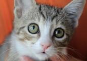 Umbrella of Hope has kittens for adoption!