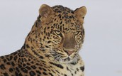 Sponsor an Endangered Species