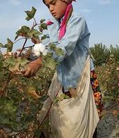 A little girl picking cotton