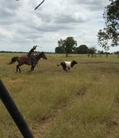 Roping This Summer