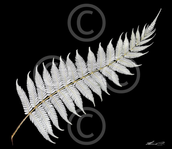 Fern leaf after 'blooming'