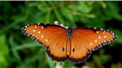 its a butterfly