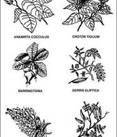 The dreffient  types of Poisons