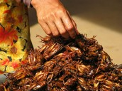 Number 10. Grasshoppers: Thailand