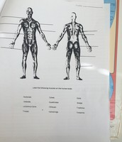 Study the Muscles of the Body