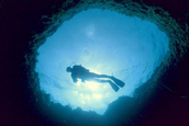 Coral bay dive