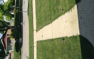Grass by sidewalk