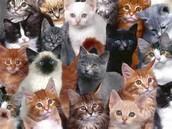 KITTIES EVERYWHERE!!!!