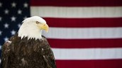 The bald eagle is the National bird.