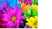 פרחים לשבת לספר: חנהל'ה ושמלת השבת
