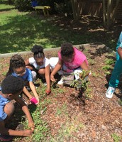 3rd graders weeding the tomato bed