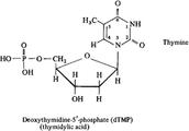 Thymine (Monomer)