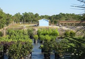Visit Deeply Rooted Garden Center