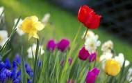 """Spring"" (12) & ""anything"" (14)"